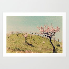 Almond Blossom Hill Art Print
