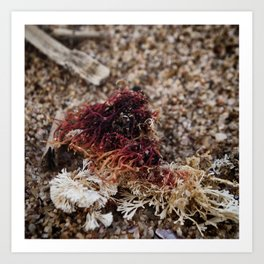 By the Seashore - Red Seaweed Art Print