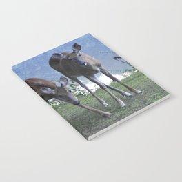 Grazing Deer Notebook