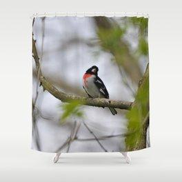 Rose Breasted Grosbeak Shower Curtain