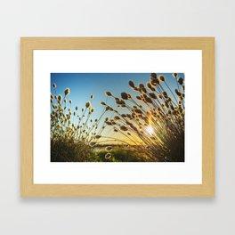 Cotton grass from the high moorland Framed Art Print