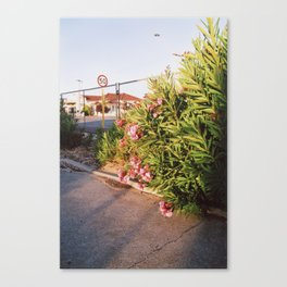 Oxford Plant Canvas Print
