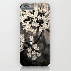 Valeriana sitchensis iPhone 6s Slim Case