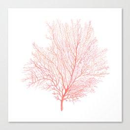 Coral Sea Fan Canvas Print