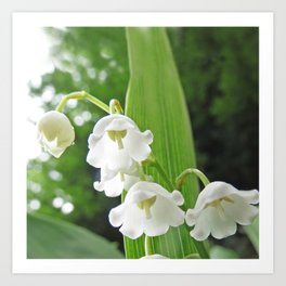 spring lily of the valley Art Print