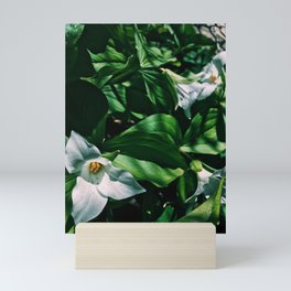 Lily's in the garden #flower Mini Art Print