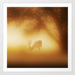 Elk in Early Morning Mist Art Print