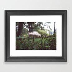 Sylvan Mushroom Framed Art Print