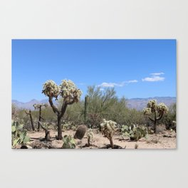 The Beauty Of The Desert Canvas Print