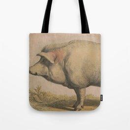 Vintage Illustration of a Domesticated Pig (1874) Tote Bag