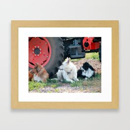 Farm Dogs Framed Art Print
