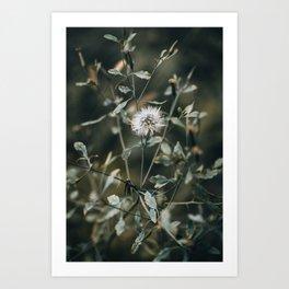 Moody Dandelion Nature Photography Art Print