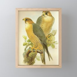 Falco Peregrinus Babylonicus Gould17 Framed Mini Art Print