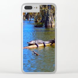 Sunning Alligator Clear iPhone Case
