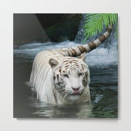 White Tiger In The River Metal Print