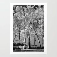 Ghost Gums Art Print