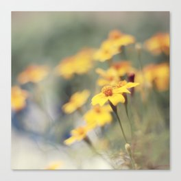 Orange zest Canvas Print