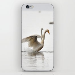 Swans. iPhone Skin