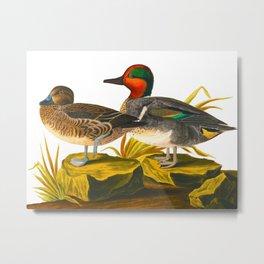 Green winged Teal James Audubon Vintage Scientific Illustration American Birds Metal Print