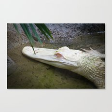 a pretty handsome alligator Canvas Print