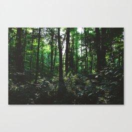Forest Trail XXIV Canvas Print