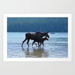 Mother moose & calf at Maligne Lake in Jasper National Park Art Print