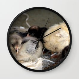 Five Young Chicks Wall Clock