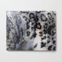 Snow Leopard Wild Cat Pattern Metal Print