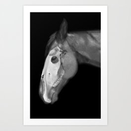 Equine Anatomy Art Print