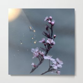 cherry blossoms in the sun Metal Print
