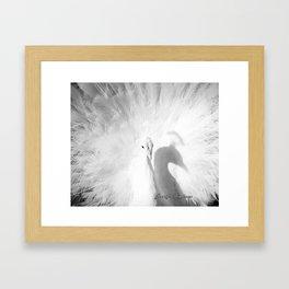 Majestic White Peacock Framed Art Print