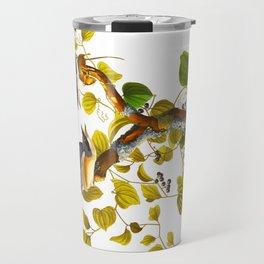 Loggerhead Shrike Bird Travel Mug