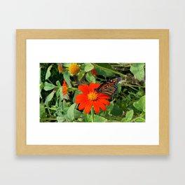 Monarch Butterfly on Red Summer Flower Framed Art Print