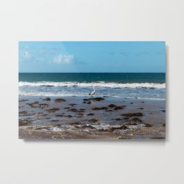 Pelican Standing in Encounter Bay Metal Print