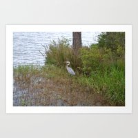 crane Art Prints featuring crane by Tiffany Davis Kornacki