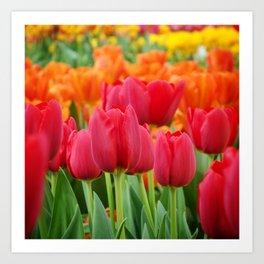 Colourful Tulips Art Print