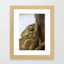 Close Up Of A Wild Green Chameleon Framed Art Print