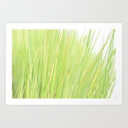 Marsh Grass Art Print