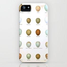Vintage Bird Eggs  iPhone Case