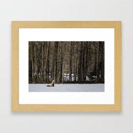 Beautiful Red Fox, No. 2 Framed Art Print