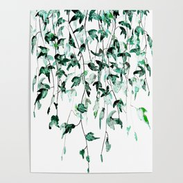 Ivy on the Wall Poster