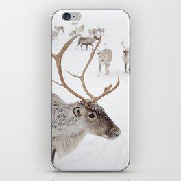 Reindeer With Antlers Art Print   Tromsø Norway Snow Photo   Travel Photography iPhone Skin
