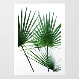 Palm Leaves 12 Art Print