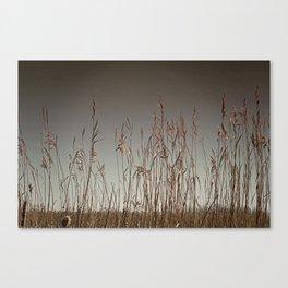 Swamp Grass Canvas Print