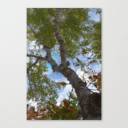 Trees in HDR Canvas Print