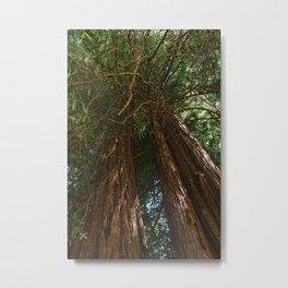 Redwood Forest VIII Metal Print