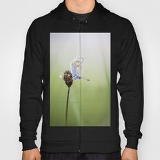 Common Blue Butterfly Hoody