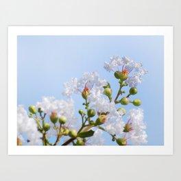 White Crape myrtle Art Print