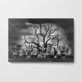 Mundon Oaks Metal Print
