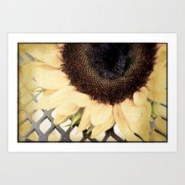 Faded Flower Art Print